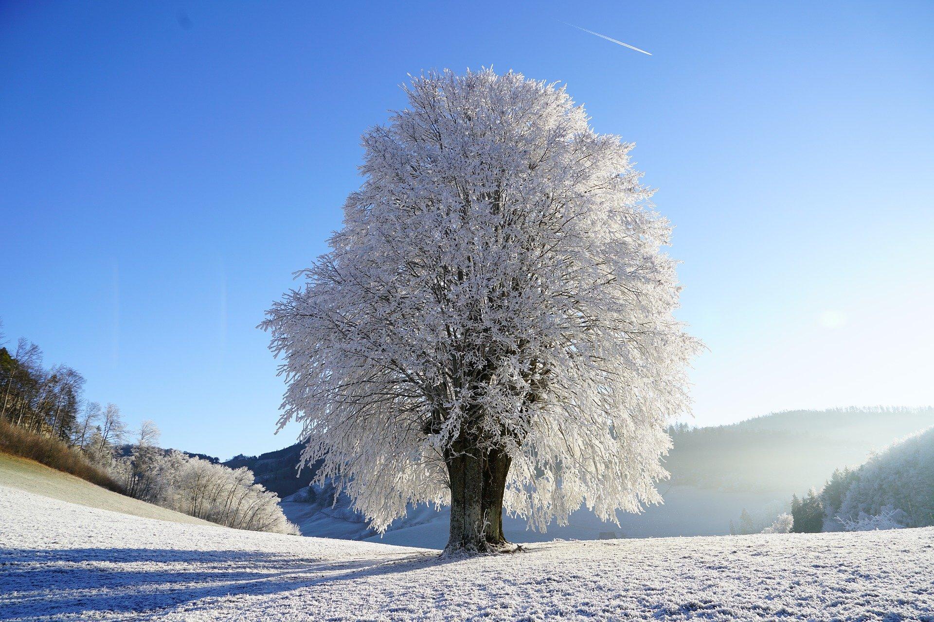 【スタサプ冬期講習】評判は?そもそも冬期講習は必要なのか冷静に考えてみた