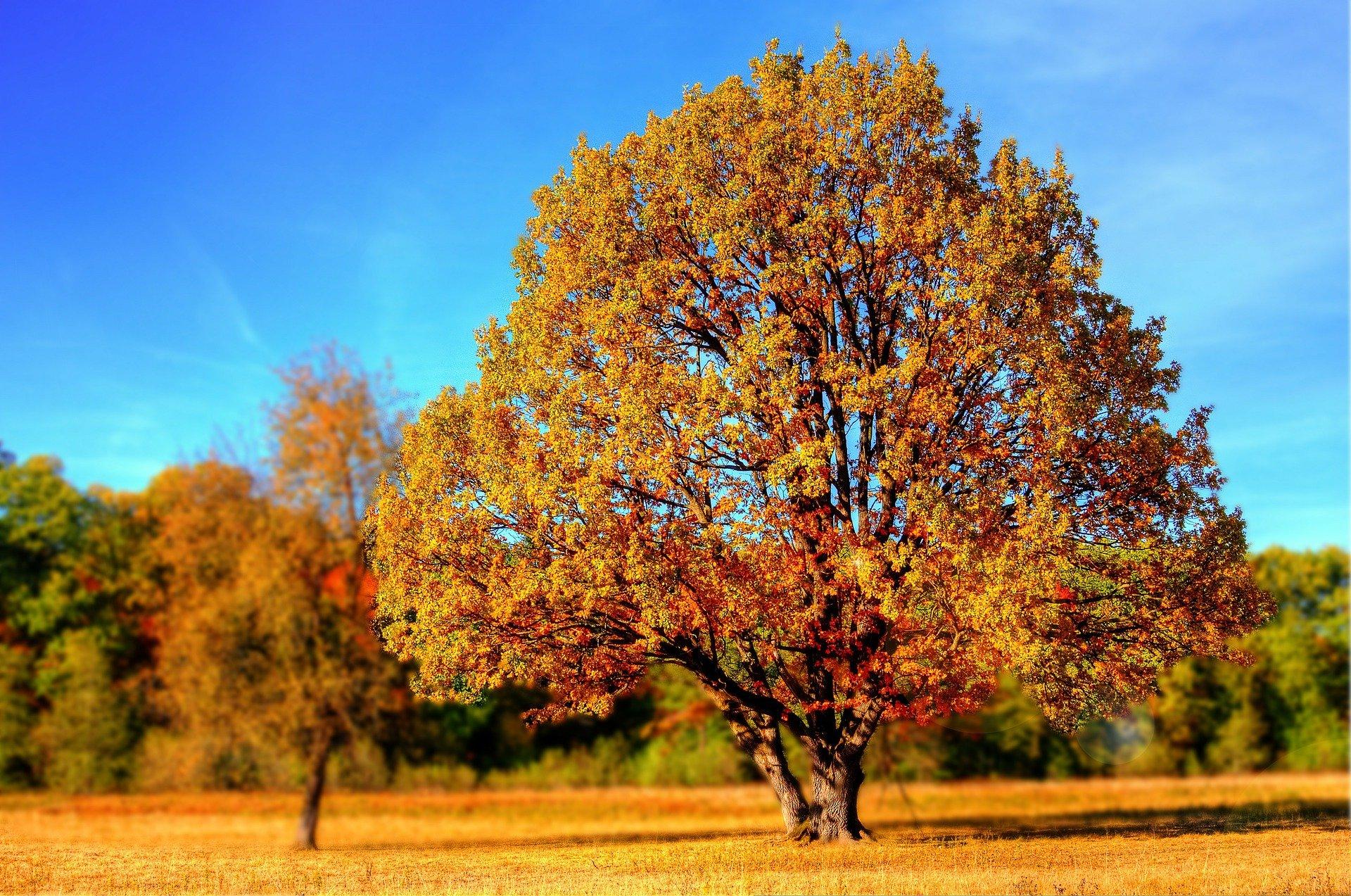 【スタサプ秋期講習】本当に必要?学習状況ごとに私なりの結論を出します